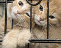 animalier en refuge
