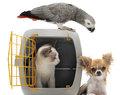 gérant d'une pension pour animaux