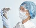 technicien animalier en laboratoire
