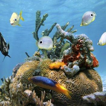 comment devenir ichtyologiste