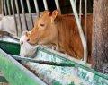 agronome en production animale