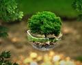 ecologiste