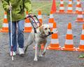 Moniteur de chiens-guides