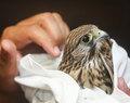 soigneur en centre de revalidation pour animaux
