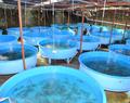 Technicien en aquaculture