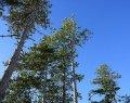 technologue en sciences forestières