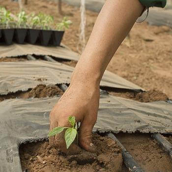 Agronome en agriculture biologique