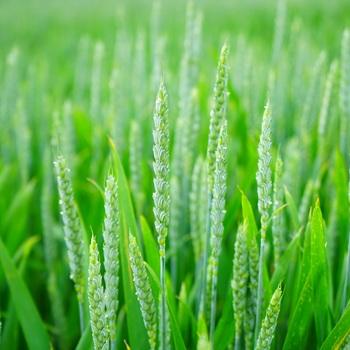 agronome en production végétale