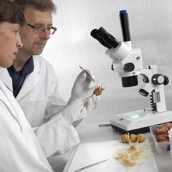 biologiste, chercheur en biologie