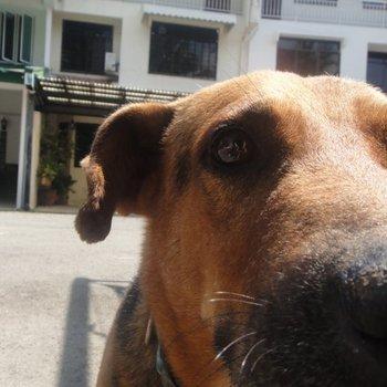 chien vétérinaire gros plan