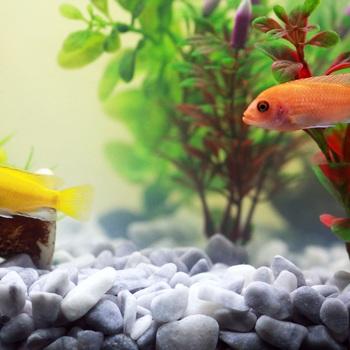 conseiller en aquariophilie