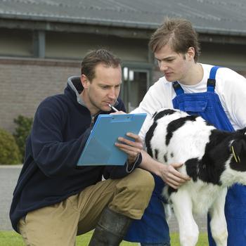 Conseiller en élevage et production animalières