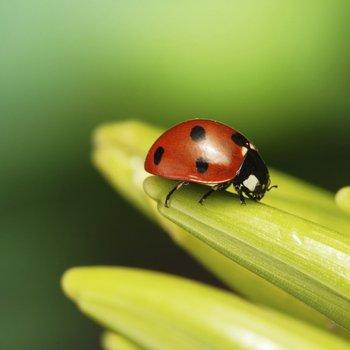 Entomologiste