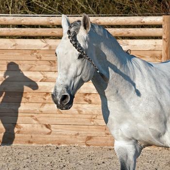 Entraîneur de chevaux