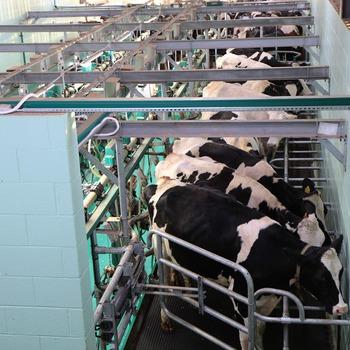 Exploitant de ferme laitière