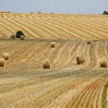 ingénieur agricole