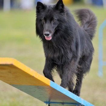 Maître chien – Educateur canin – Cynotechnicien