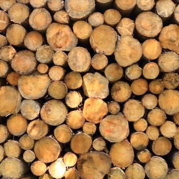 Opérateur de séchoirs à bois