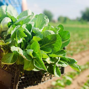 ouvrier agricole