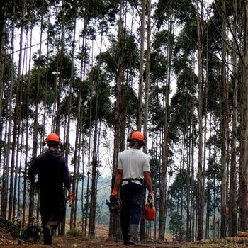 Ouvrier d'exploitation forestière