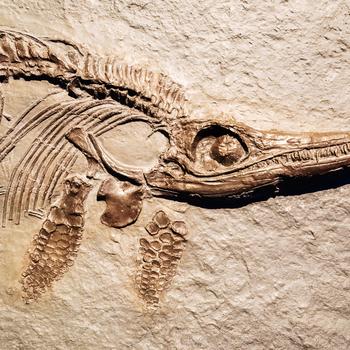 paléonthologue