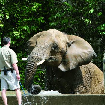 soigneur en parc animalier
