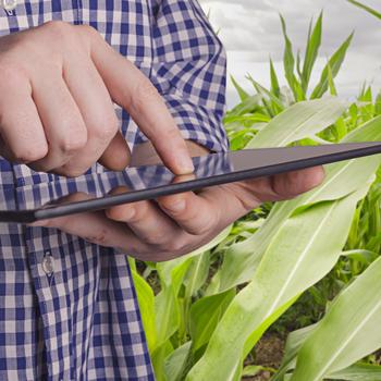 Technologue en productions végétales