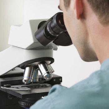 vétérinaire pathologiste
